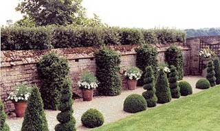 Use of spiral, cone and ball topiaries