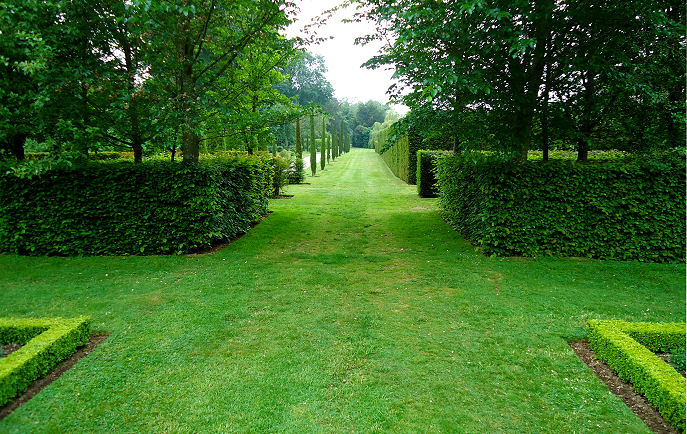 Hornbeam avenue outside the Baroque Gardens