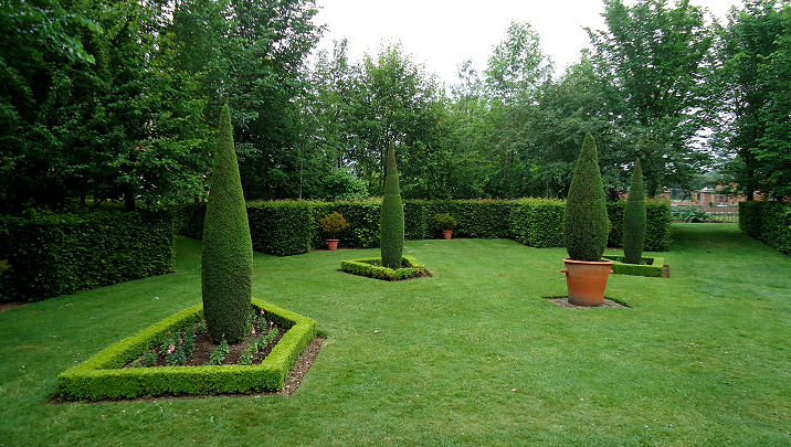 Conifer pillars trained in a fastigiate form
