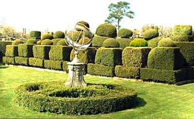 Topiary chess set in yew