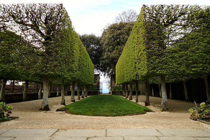 Pleached horbeams in the raised garden