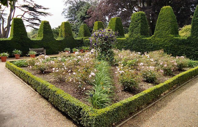 Walled garden with parterre with unusual battlemented yew walls