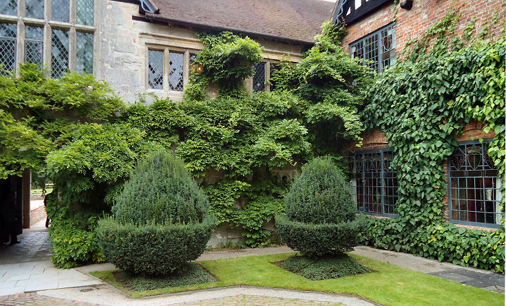 Yew specimens in the Inner Courtyard