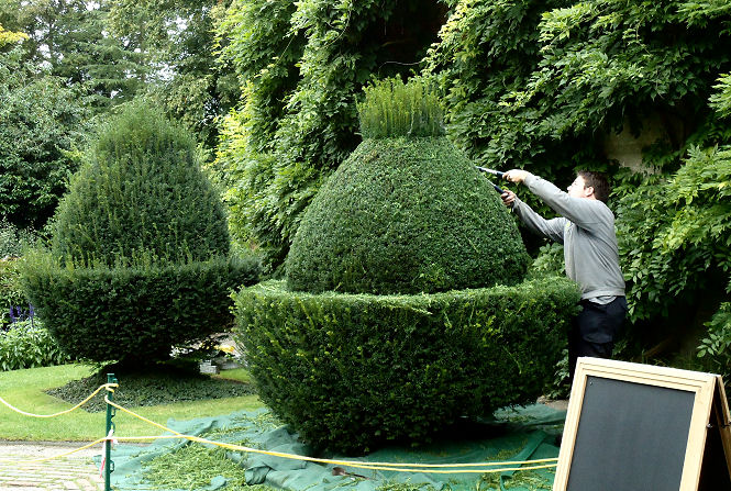 National Trust gardener at work on the annual clip