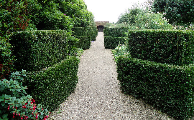 The box walk in the walled garden