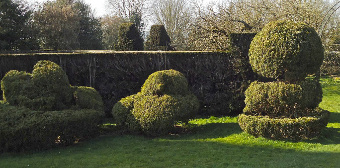 Good view of the recently squared off yew hedges surrounding the Topiary Ring.