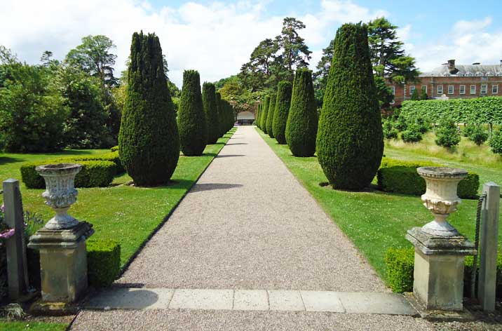 The fastigiate yew avenue