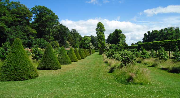 Yew statement cones line a row like soldiers