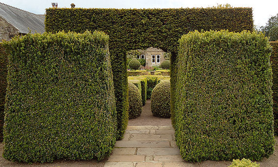 Perfect yew arch with box outriders