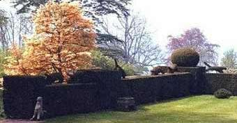 Animals running on top of a yew hedge