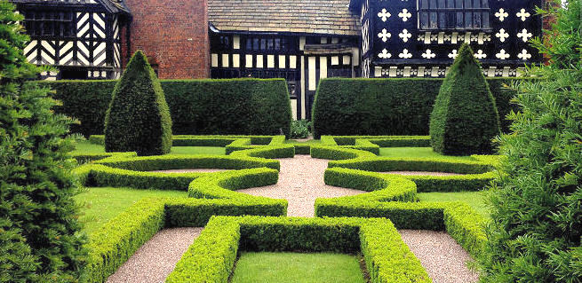 The box parterre looking towards the house showing the yew specimens