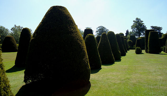 Serried ranks of topiary