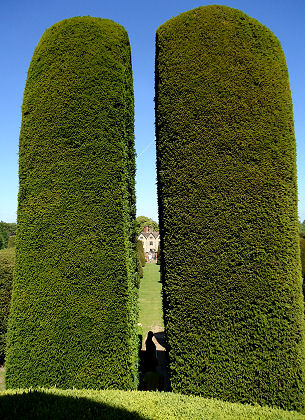 Tall yew pillars