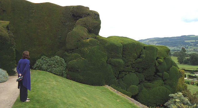 The boundary hedges showing centuries of growth