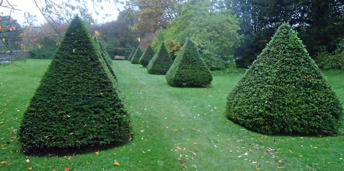 Yew pyramids lined up like soldiers