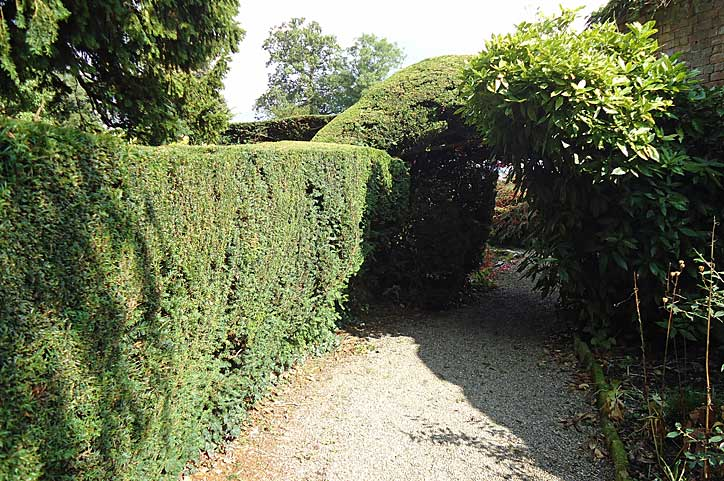 Magical arch cut out of a hedge