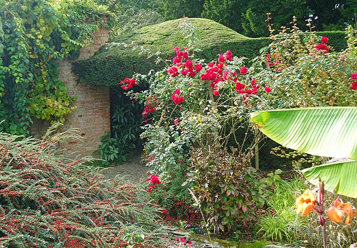 Overgrown cotoneaster and jungle type plants leads to a secret arch