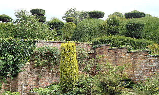 View of the giant yew topiary from the tower garden