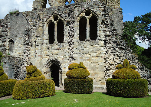 Green yew topiary set off by the grey ruined walls
