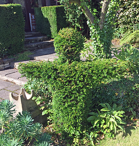 Topiary person in yew
